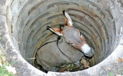 burro buraco